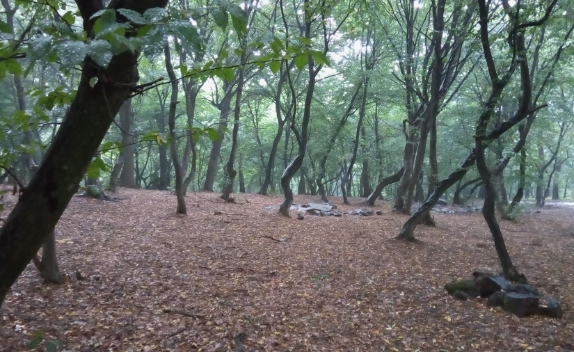 Aventuri în PădureaBaciului