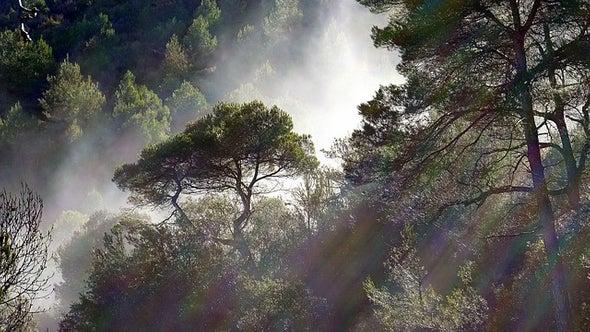 Pe ritm de copaciînfloriți